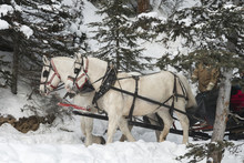 Horse Drawn Sleigh, Lake Louise, Banff National Park, Alberta, C