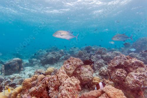 Staande foto Koraalriffen Trevally Fish near ocean bottom