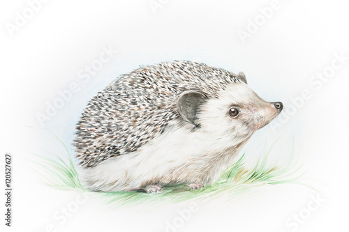 akwarela-ilustracja-jeza