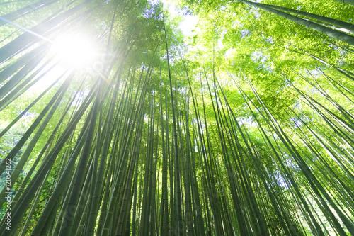 Foto op Canvas Bamboo 竹林 緑 見上げる 太陽光線 木漏れ日 レンズフレア