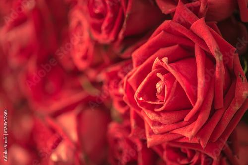 Keuken foto achterwand Roses red rose flower for background