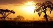 Typical african sunset with acacia trees in Masai Mara, Kenya