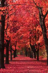 Obraz nice autumn park