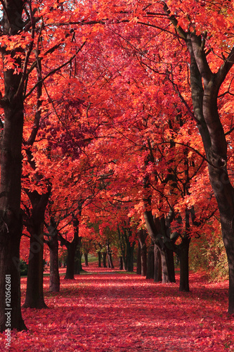 nice autumn park - 120562681