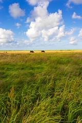 Obraz na Szkle Wiejski slowinski landscape