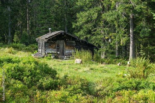 Fotografie, Obraz  Hütte im Wald