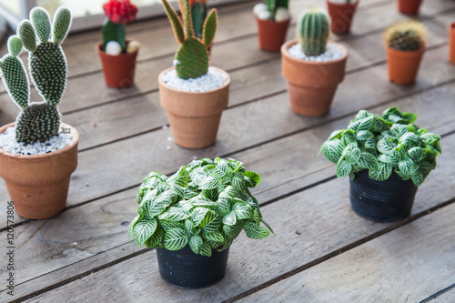 Small Diffe Types Of Cactus Plants In A Row On Wooden Table Various Sizes And
