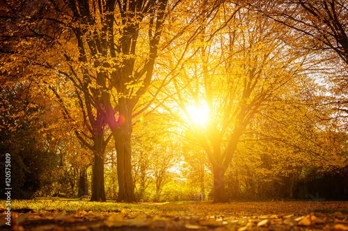 Fototapeta Herbstlaub im Sonnenlicht obraz na płótnie