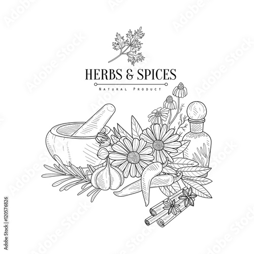Photo Herbs And Spices Hand Drawn Realistic Sketch