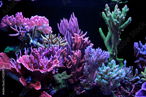 Wall Murals Under water Dream coral reef aquarium tank