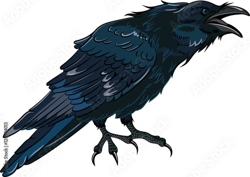 Photo Black crow which caws isolated on white, vector illustration, eps-10