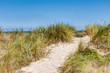 Dünengrass am Sandstrand