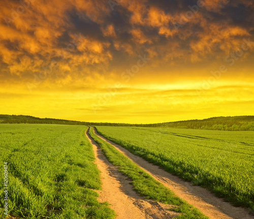 Papiers peints Vignoble Dirt road in wheat field at sunset. Spring landscape.