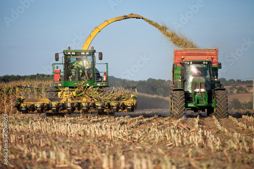 Fotografie, Obraz  Récolte du maïs en France