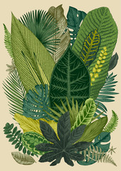 Panel Szklany Botaniczne Vector vintage composition. Exotic leaves. Botanical classic illustration.