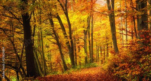 Aluminium Prints Autumn Wald im Herbst in angenehm warmen Farben, ein Weg führt in die Szene hinein