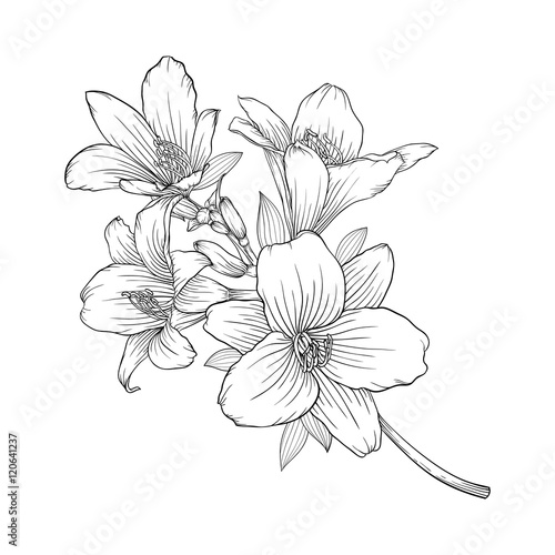 Carta da parati beautiful monochrome black and white bouquet lily isolated on background
