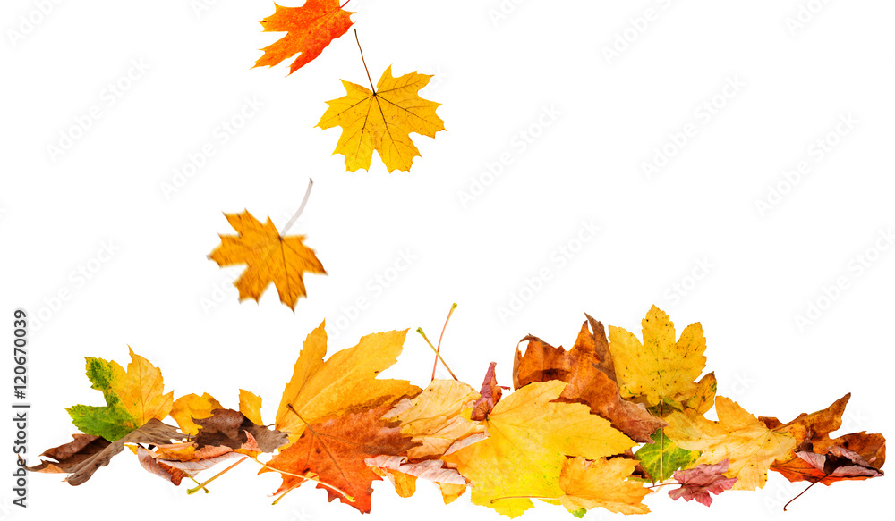 Fototapety, obrazy: autumn leaves