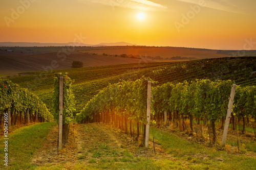 Tuinposter Wijngaard Evening view of the vineyards