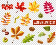 Autumn Leaves Transparent Set