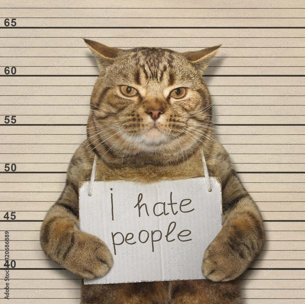 Fototapeta A bad cat hates people. It was arrested.