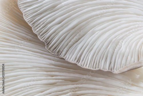 Photo sur Toile Les Textures abstract background macro image of mushroom, Sajor-caju Mushroom