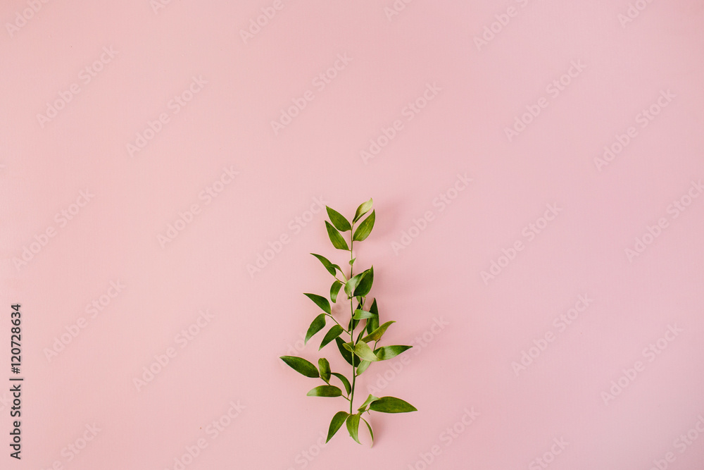 Fototapety, obrazy: beautiful green fresh branch on pink background. flat lay, top view