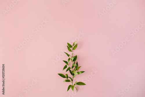Fotografie, Obraz  beautiful green fresh branch on pink background