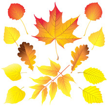 Set Of Different Leaves In Autumn Colors: Maple, Box Elder (ashleaf Maple), Birch, Aspen, Oak, Alder And Linden . Vector Illustration.