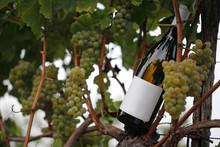 Bottiglia Di Vino In Vigna