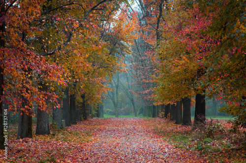 Valokuva  Autumn Park path covered in fallen coloured leaves