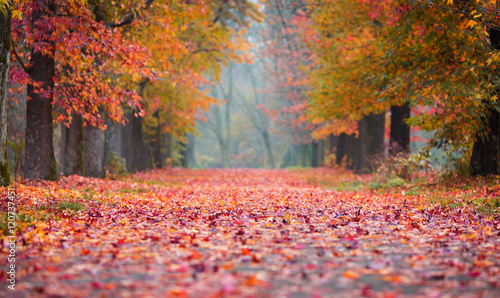 Foto op Canvas Herfst Autumn Park path covered in fallen coloured leaves