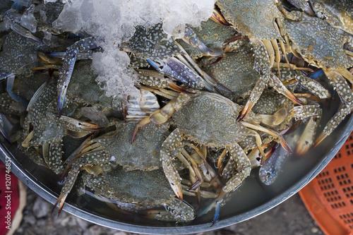 Fresh flower crab, Blue swimmer crab, Blue manna crab, Sand crab, Portunus pelagicus on ice in a local market in Thailand