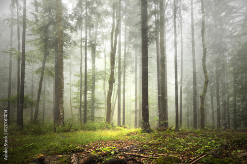 Foto op Aluminium Bos Beautiful foggy forest landscape with rainfall.