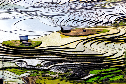 Poster Rijstvelden Beautiful terraced rice fields in Vietnam
