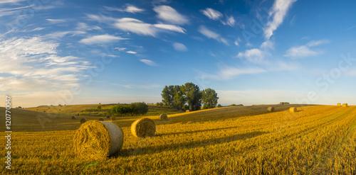 Fototapeta Panorama pola po żniwach,snopki słomy,piękne niebo obraz