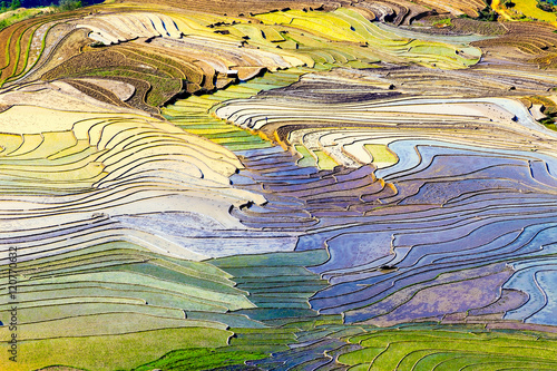 Foto op Plexiglas Zwavel geel Beautiful terraced rice fields in Vietnam