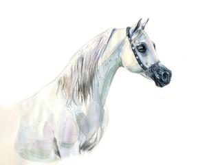 white arabian horse watercolor portrait