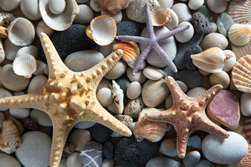 Background of sea shells and starfish