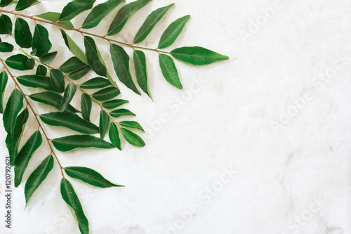 Photo Curry leaves on white background, selective focus