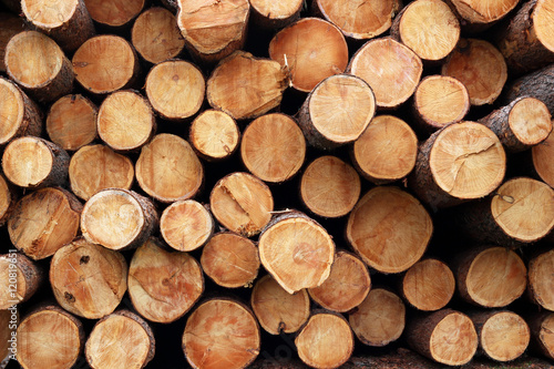 Photographie  Pile of wood logs. Wood logs texture background