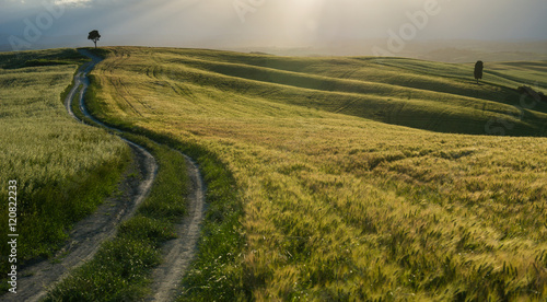 Foto op Aluminium Purper Tuscan countryside