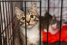 Little Kittens In A Cage Of A Shelter