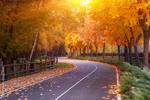 Foto op Canvas Herfst empty road and colorful yellow, green and red trees in autumn park