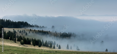 Poster Morning with fog Foggy Landscape. Mountain ridge with clouds flowing through the pine trees.