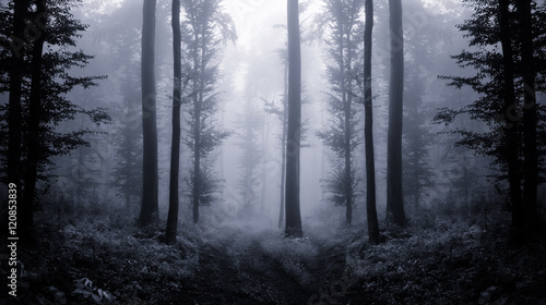 dark forest at twilight