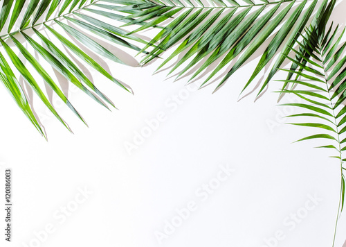 Recess Fitting Palm tree areca palm leaves