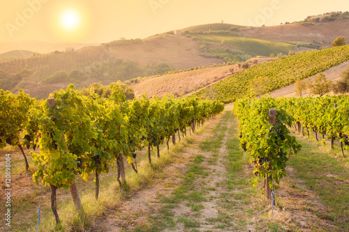 Poster Wijngaard Vineyard among Hills on sunset