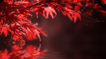 Red Leaves On Tree Branch. Natural Autumn Background