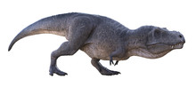 3D Rendering Of Tyrannosaurus Rex Stalking, Isolated On A White Background.